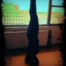 blog headstand pix
